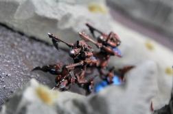 Epic Armageddon Tormentor Titans